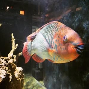 Key west aquarium fun in key west for Key west fish and chicken
