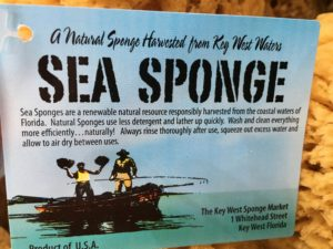 key west sponge market