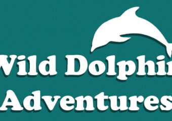 wild dolphin adventures key west