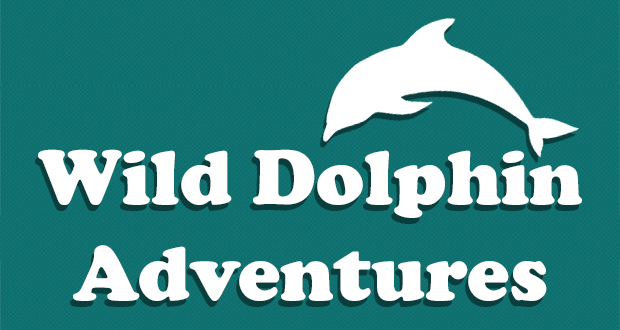 wild dolphin adventures key west